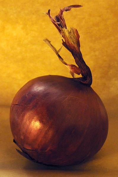 Rödlök, Allium cepa