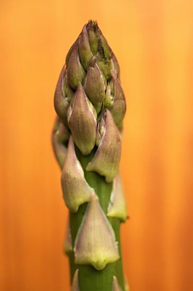 Sparris, Asparagus officinalis