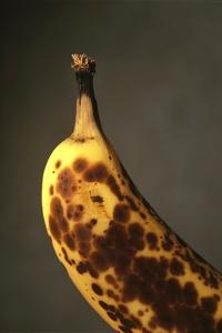 Banan, Musa sp.