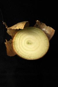Gul lök, Allium cepa