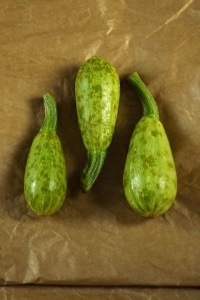 Minisquash, Cucurbita pepo, squash, zucchini