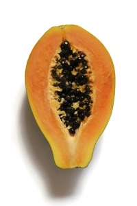 Papaya, Carica papaya