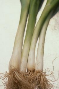 Purjolök, Allium porrum
