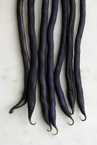 Störbrytböna 'Carminat', Phaseolus vulgaris