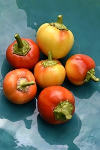 Tomatpaprika 'Ontata', Capsicum annuum, paprika